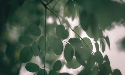 Moringa – dlaczego potrzebujesz tego suplementu