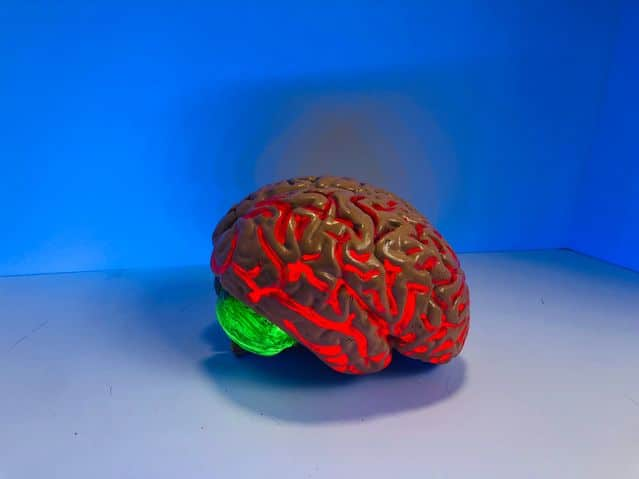 Mózgowy przepływ krwi ma zasadnicze znaczenie dla wydajności poznawczej